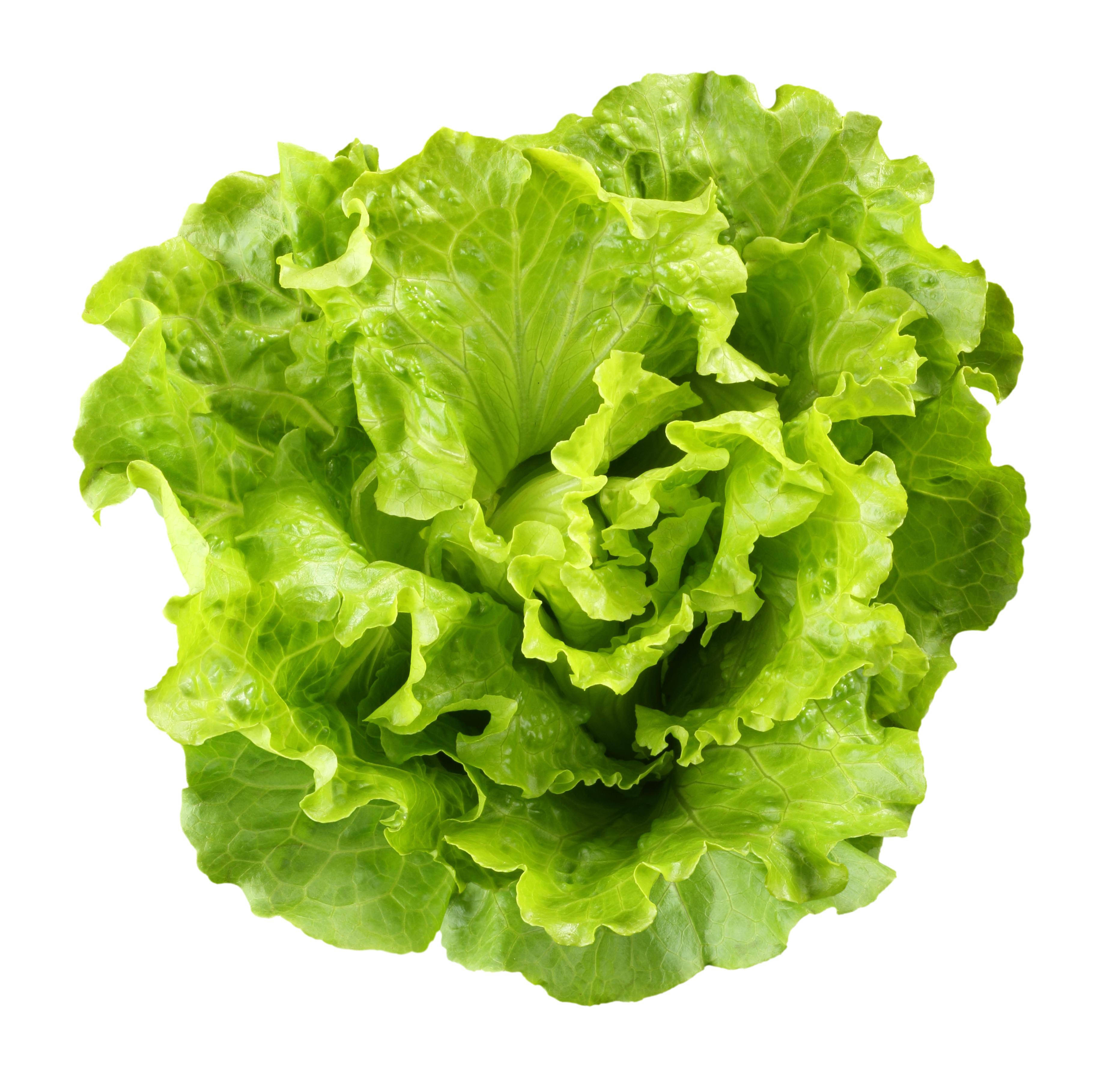 The Lettuce Recalls Co...