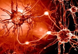 avelox neuropathy